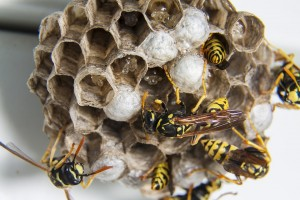 Wasps Nests & Vaginas?!  The Mind Boggles….